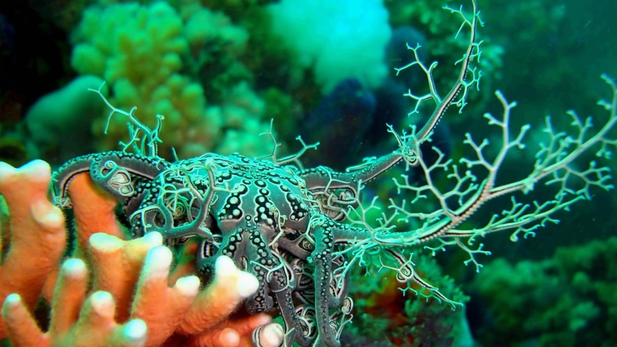 OCTOPUS sealife underwater ocean sea art artwork wallpaper