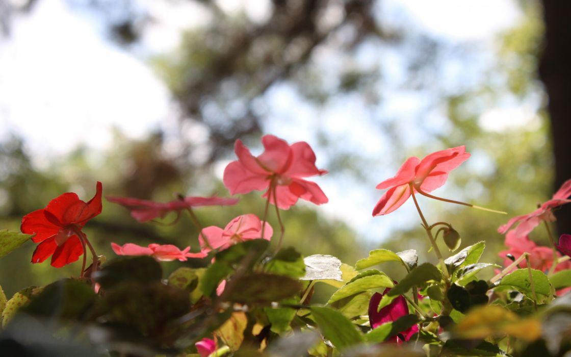 Flowers red sun nature summer wallpaper