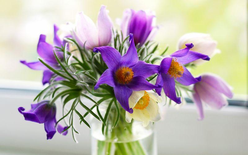 flowers purple vase nature wallpaper