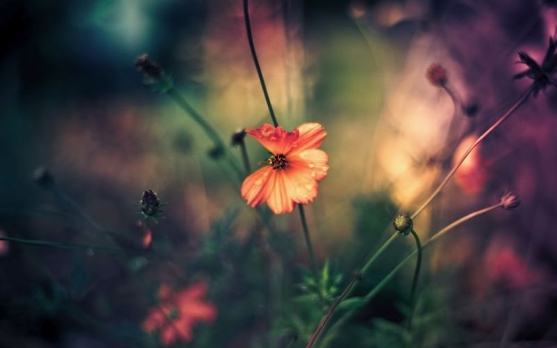 flowers nature pink small wallpaper