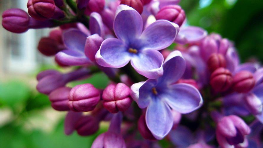 flowers purple pink blue nature wallpaper