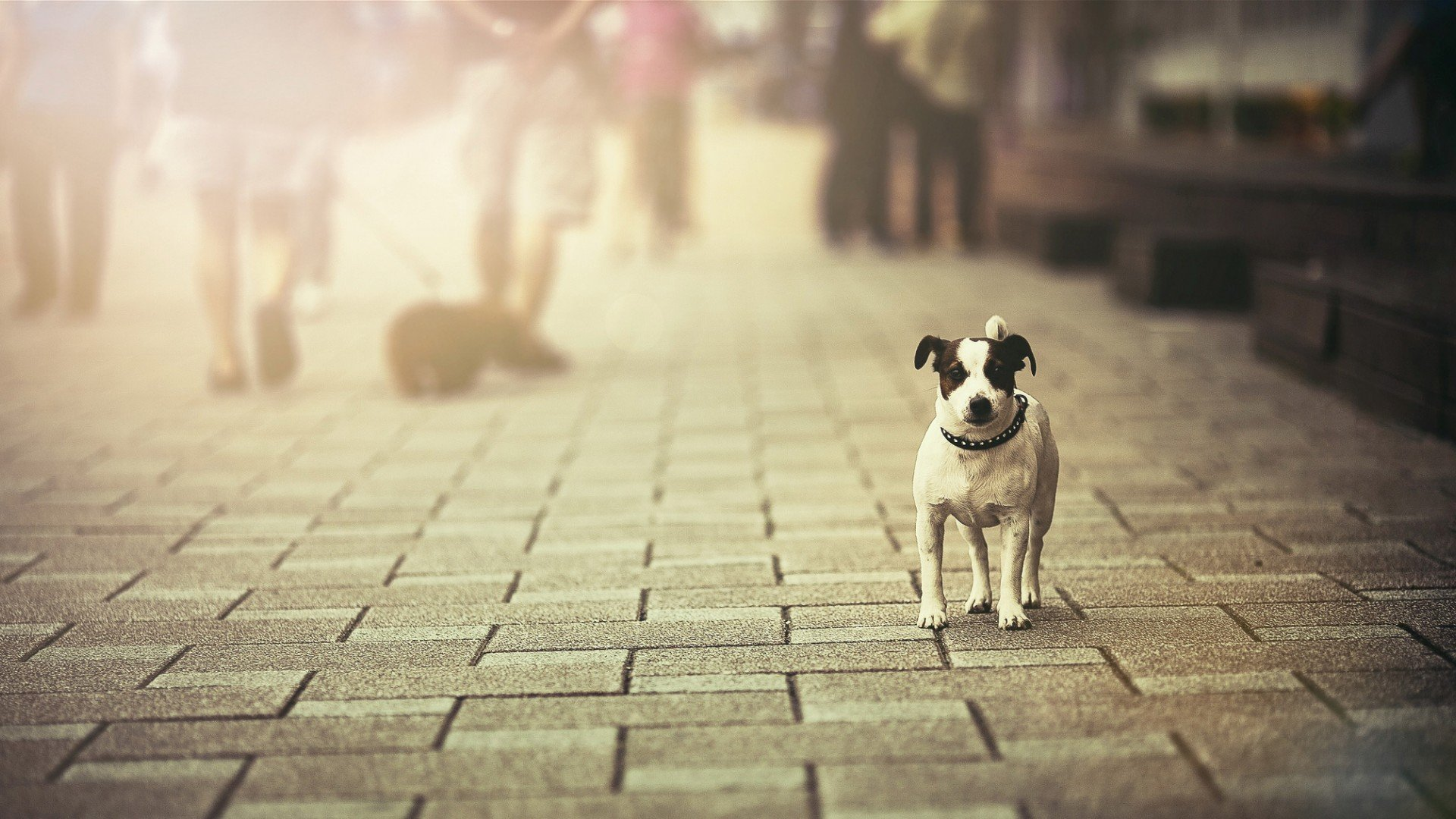 Pet Supplies for pet lovers everywhere! Pet Street Mall is the only place you need for your pet supply needs. We only offer pet accessories of the highest quality for the Lowest Prices. And, on each order over $50 within the continental US, we'll ship for FREE!