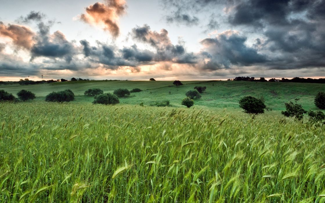 nature filed sky clous green wallpaper