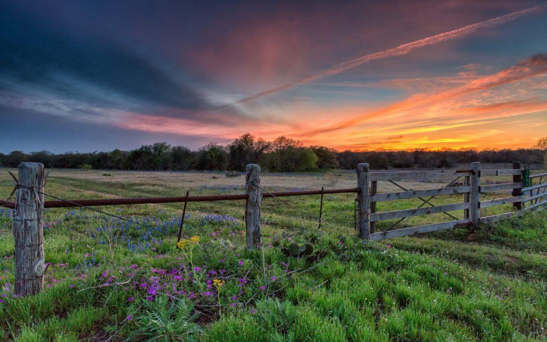 sunset filed nature sky summer wallpaper