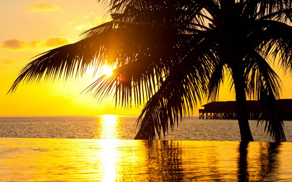 sea sunset palm ocean summer wallpaper