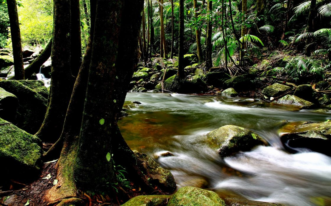 river forest nature trees green rocks wild wallpaper