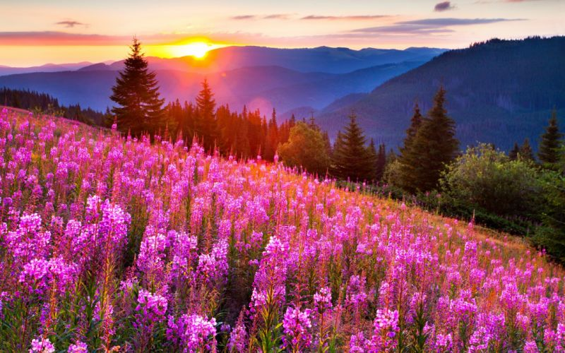 filed nature sky sun flowers mountain green wallpaper