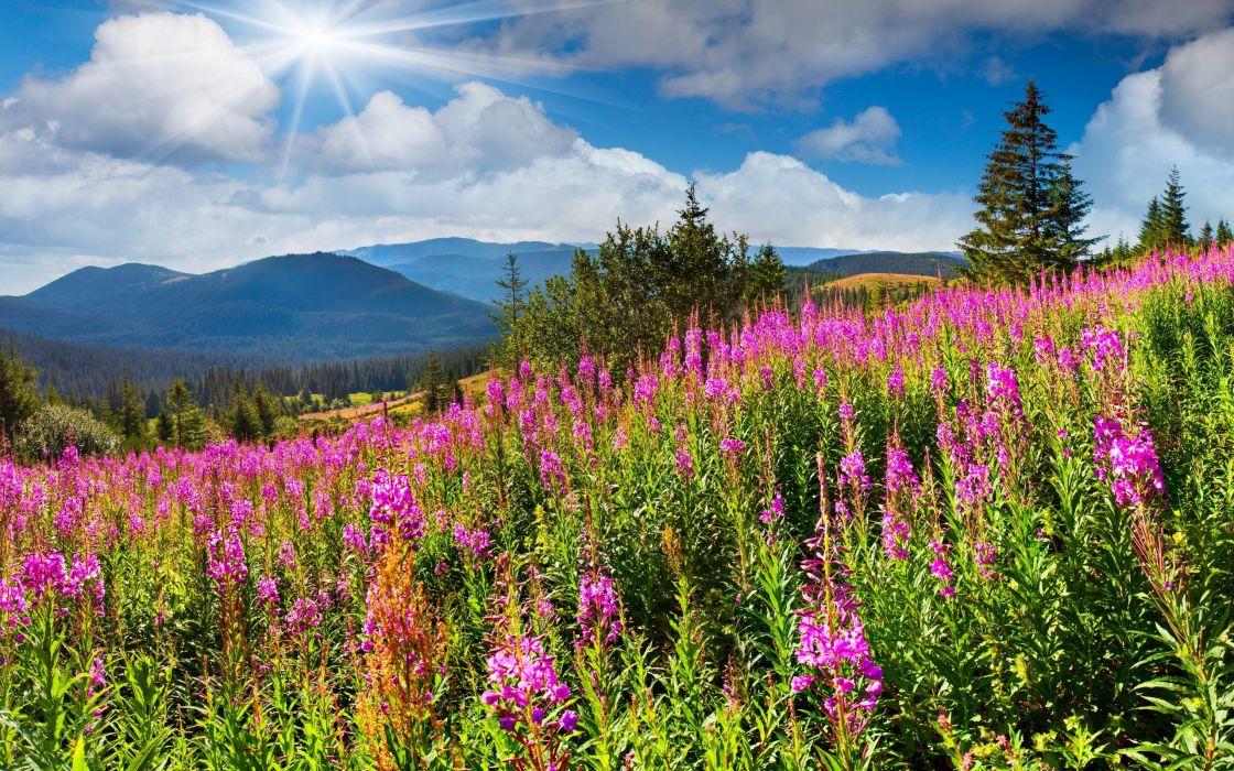 filed nature sky sun flowers mountain green wallpaper