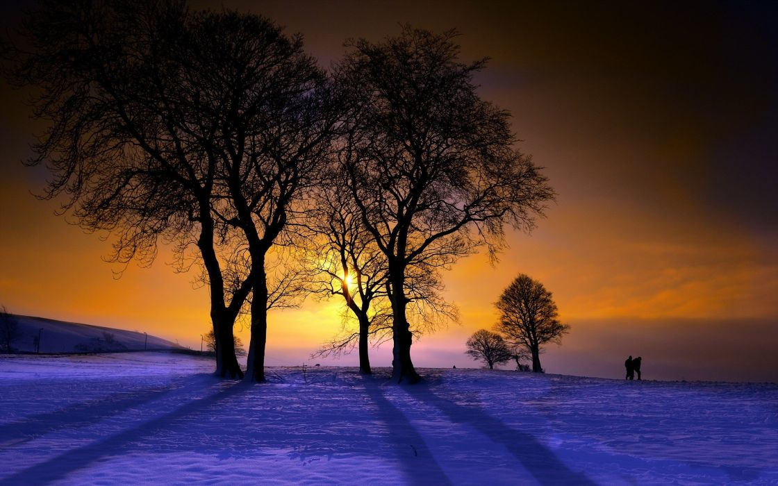 winter sunset nature trees wallpaper