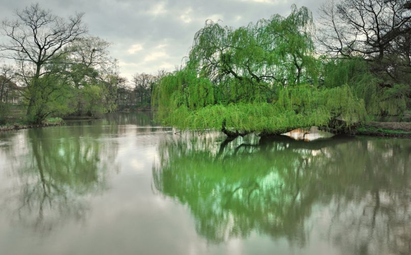 river wild nature forest green trees wallpaper