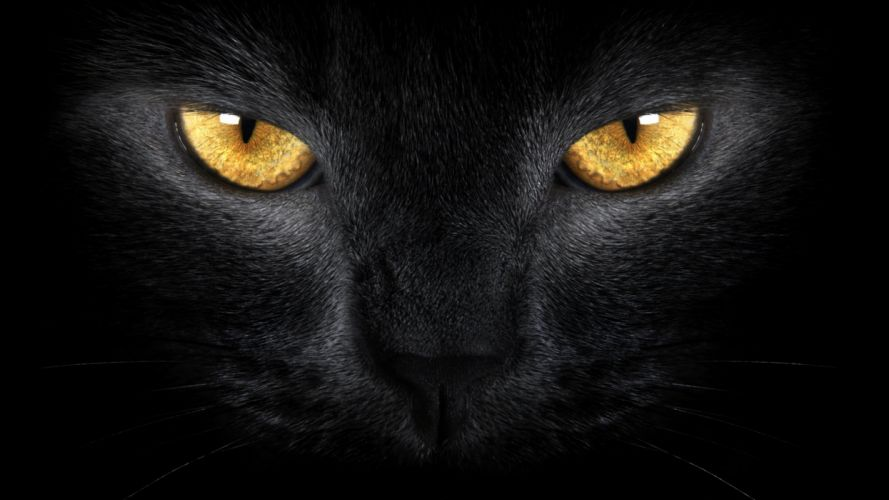 cat eyes black yellow look pet wallpaper