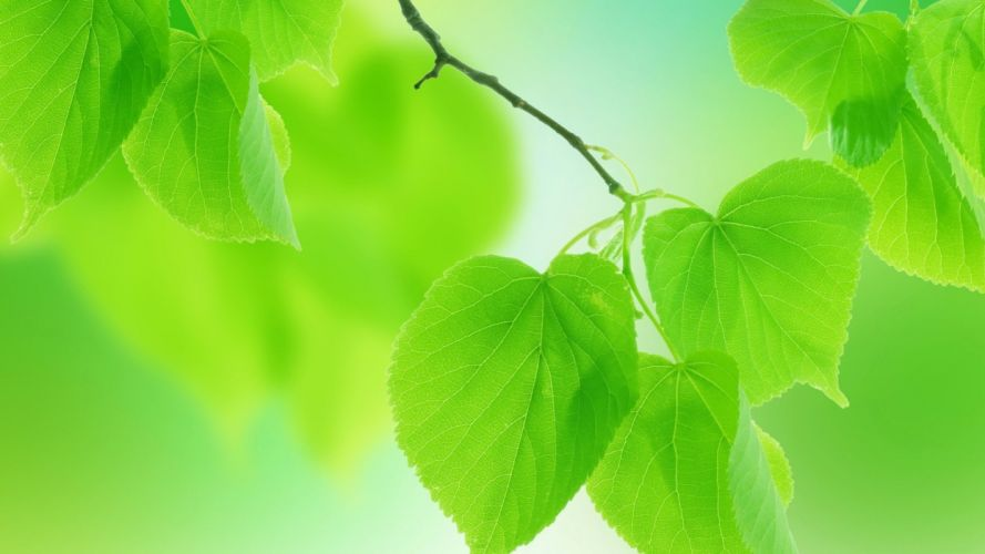leaves green nature wallpaper