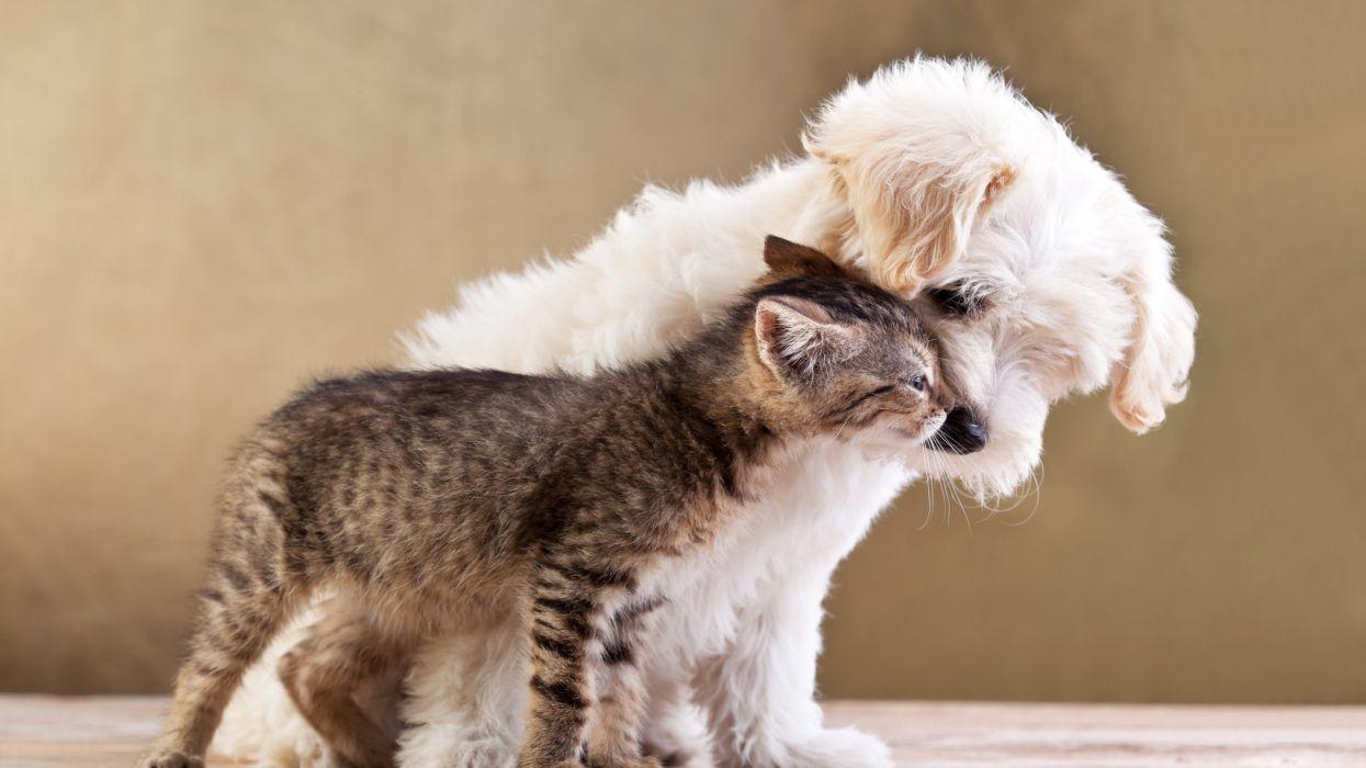 dog cat love pets animals wallpaper