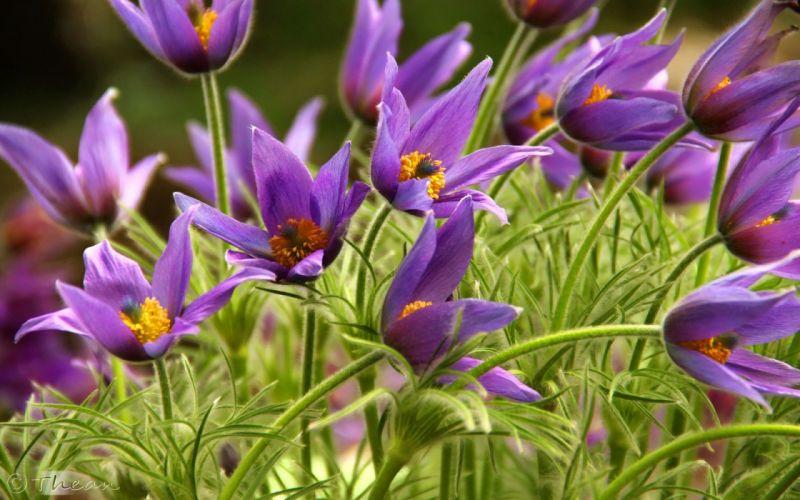 flowers purple yellow grass wallpaper