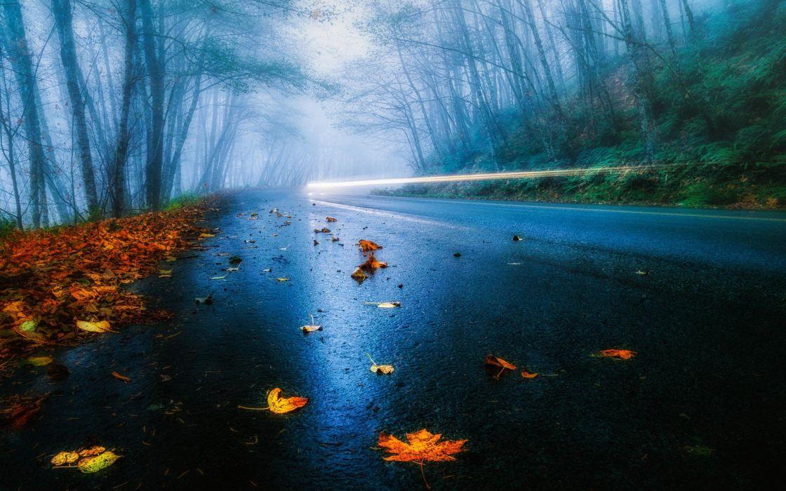 road wet rain car light leaves wallpaper