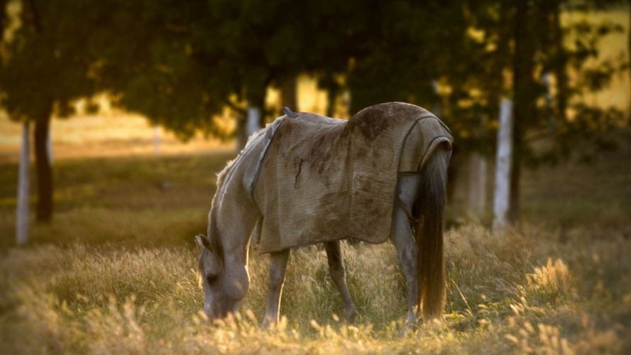 horse animal filed grass alone sunset wallpaper