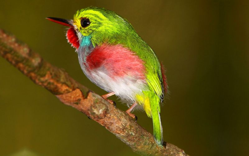 bird color green tropic animal wallpaper