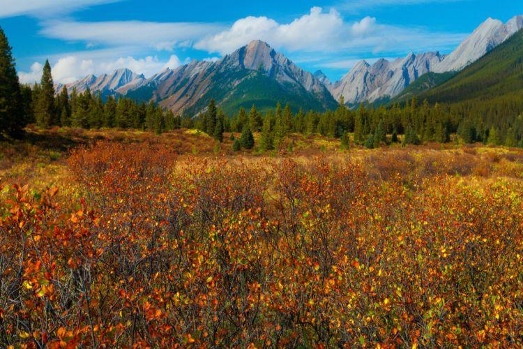 banff national park canada alberta meadow mountains wallpaper