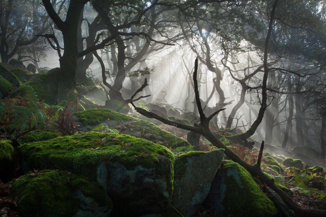 light forest rocks fog mist wallpaper