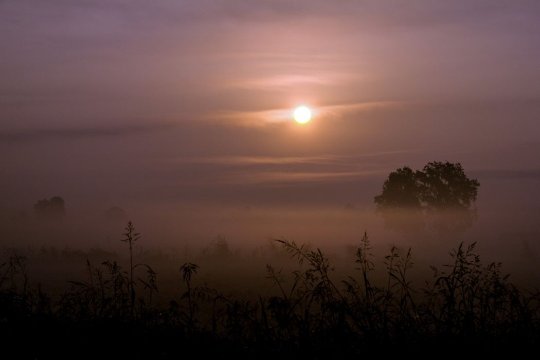 sun grass fog trees sunrise sunset landscape wallpaper