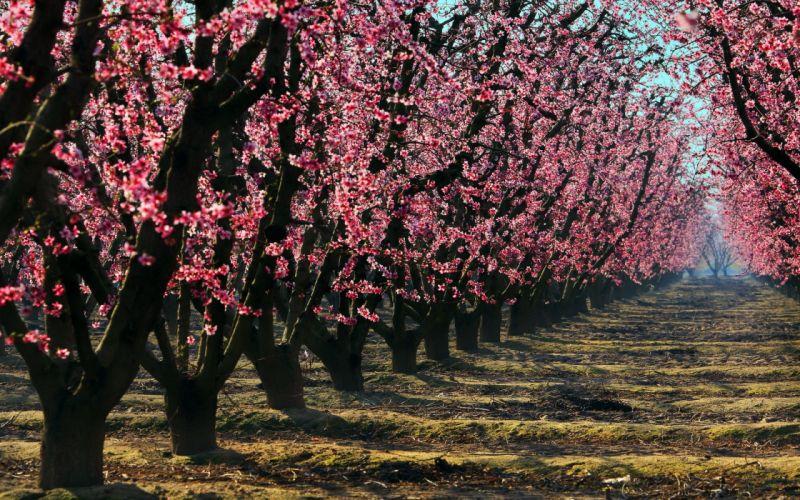 woods garden flowers pink wallpaper