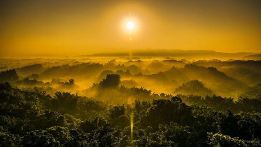 sunset jungle fog nature wallpaper
