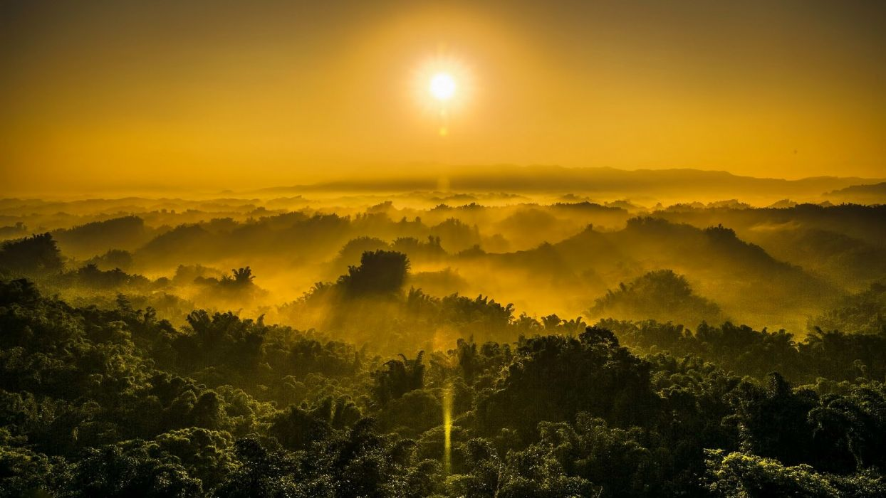 sunset jungle fog nature wallpaper