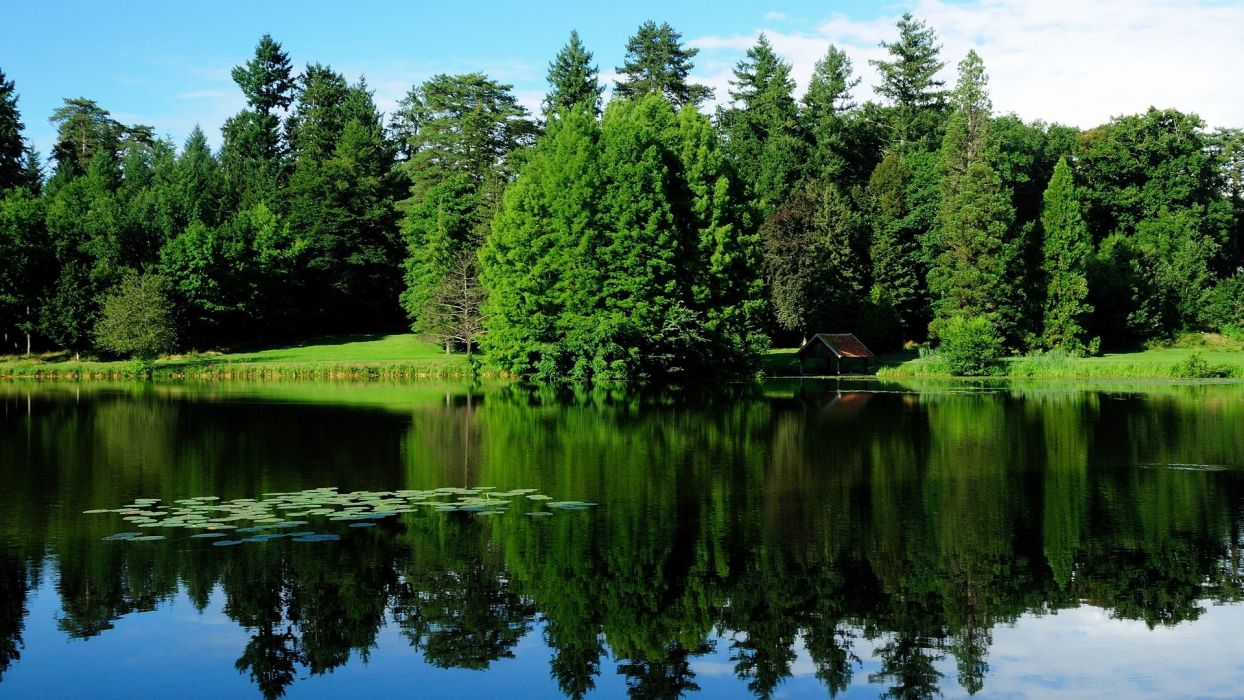 lake nature forest green wallpaper