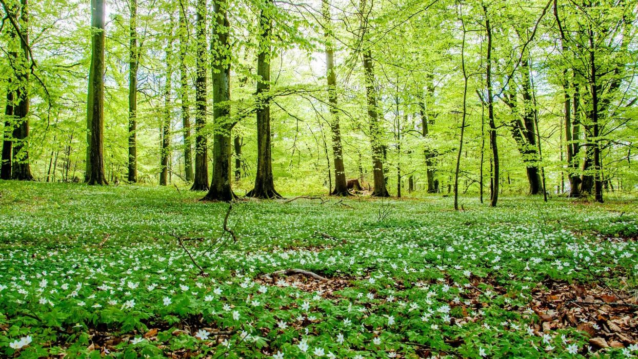 forest green woods flowers nature wallpaper