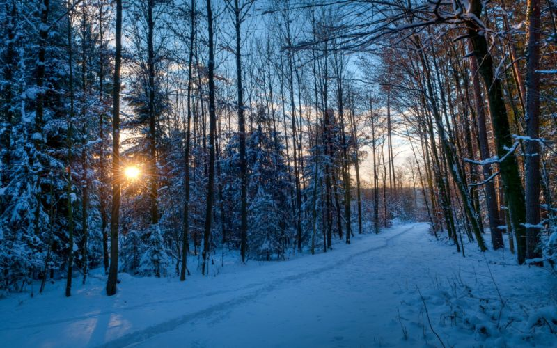 winter nature forest sunset sky wallpaper
