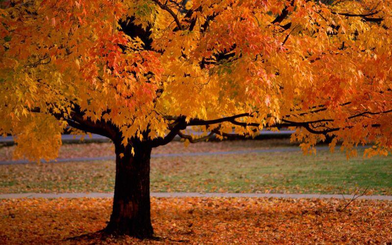 SuperPack Beautiful Nature HD Wallpaper wallpaper