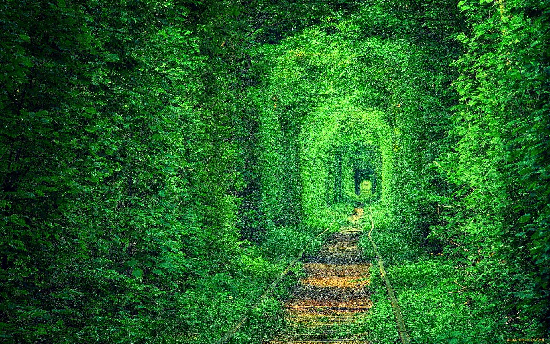 Tunnel Green Rails Road Garden Wallpaper | 1920x1200 | 442254 | WallpaperUP
