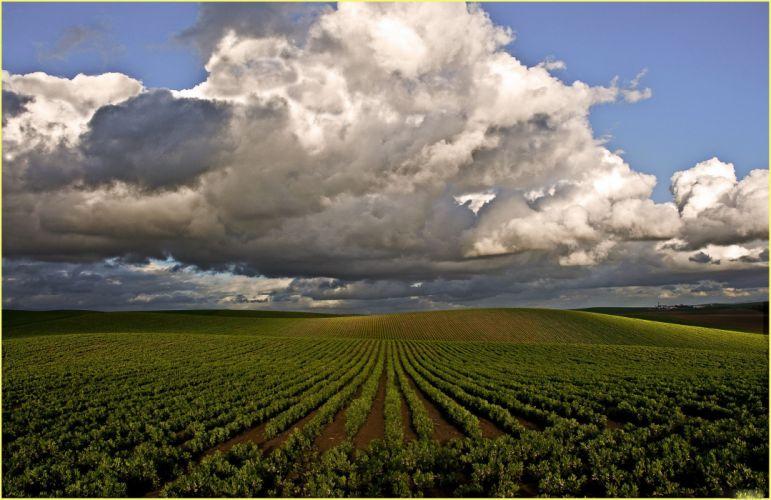 sky clouds nature filed garden wallpaper