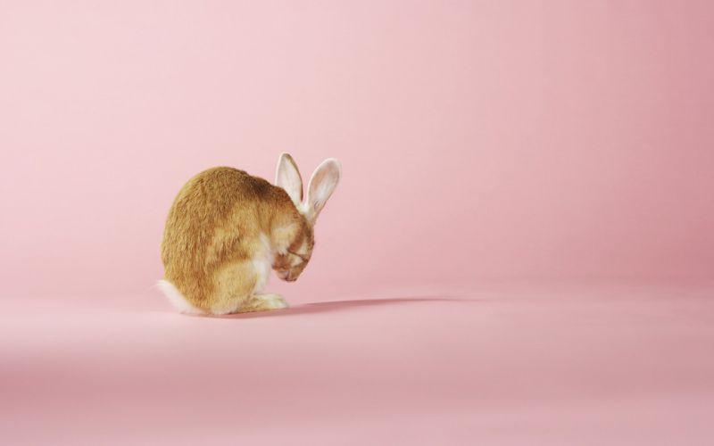 rabbit in pink wallpaper