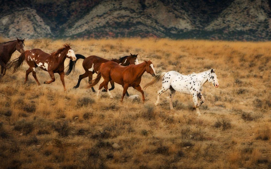 horses 212 wallpaper