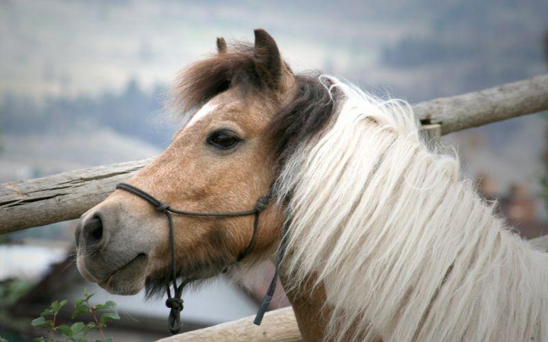 dumb horse wallpaper