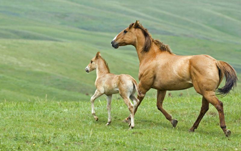 horse 12 wallpaper