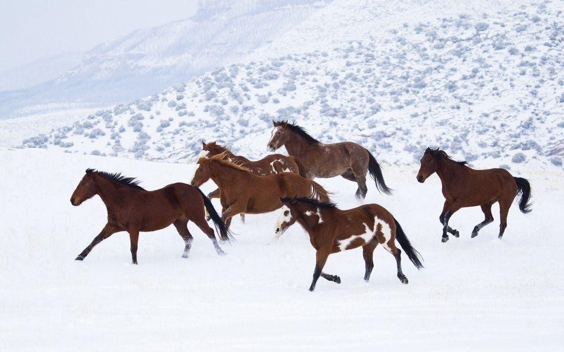 horses313 wallpaper