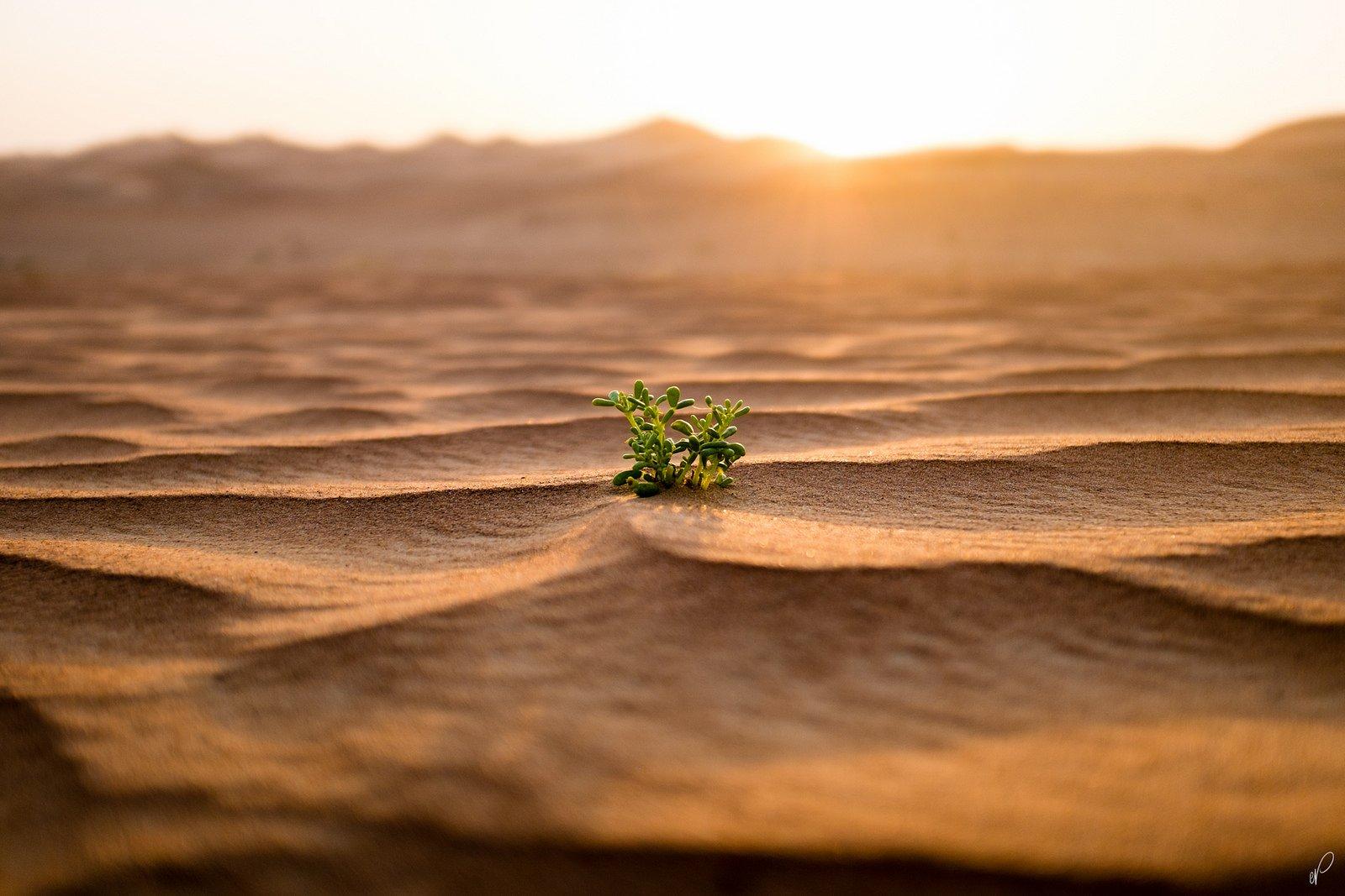 Рослини в пустелі фото 1 фотография