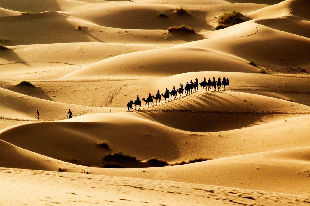desert sand camels caravan sun wallpaper