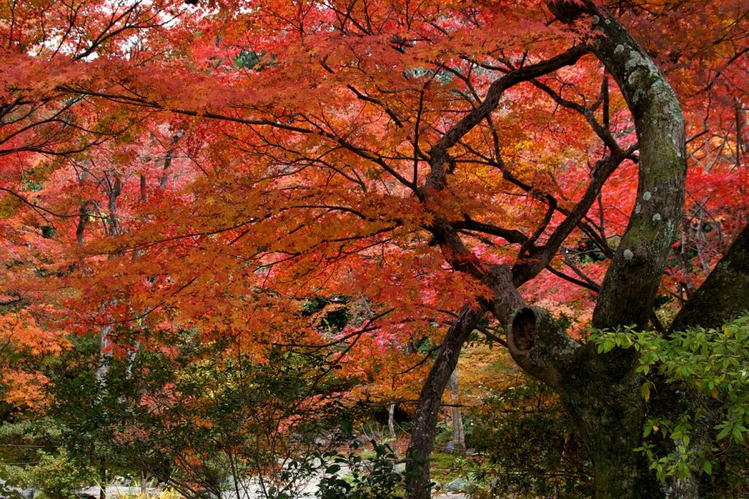 automne season nature landscapes rain fall wallpapers leaf tree campaign wet wallpaper