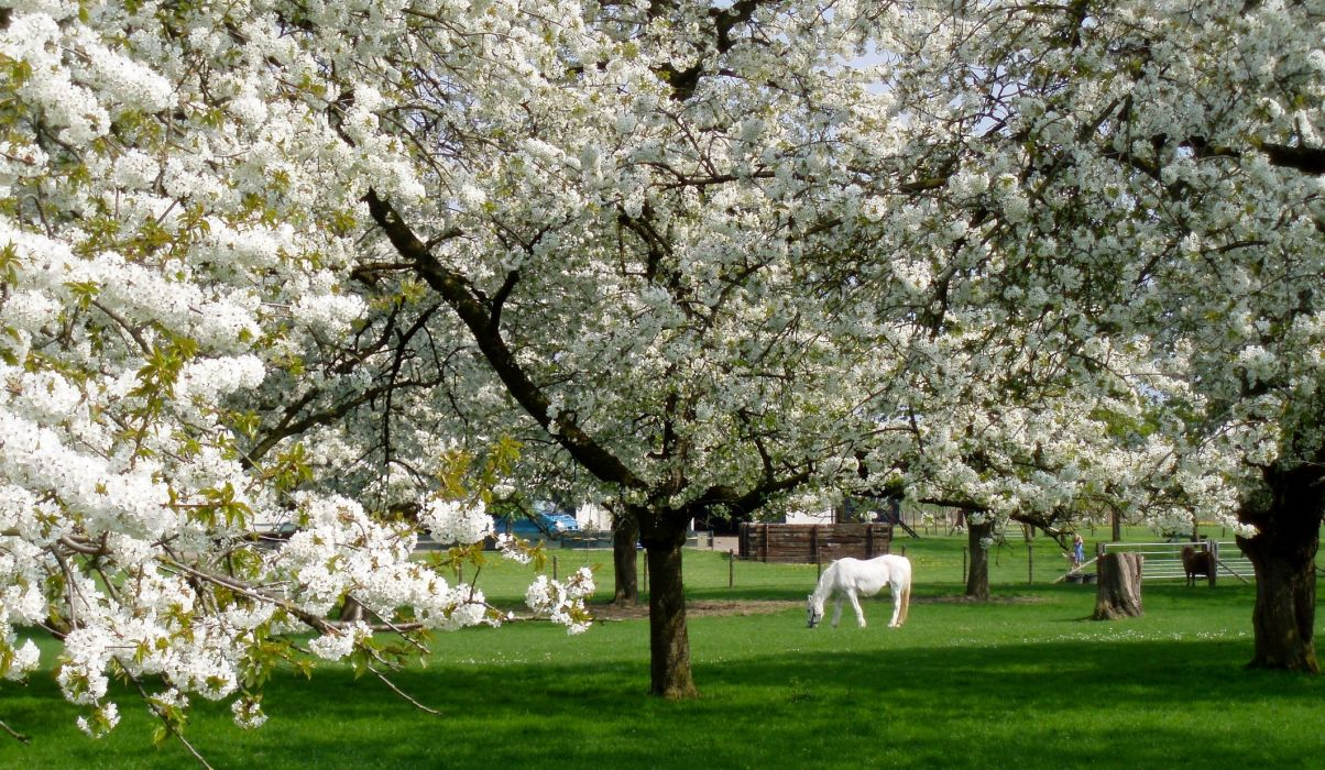 string printemps tree campaign season nature landscapes wallpapers insects flowers wallpaper