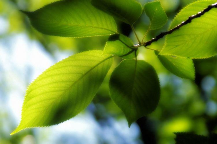 Green leaf dew nature walppaper branch tree macro wallpaper
