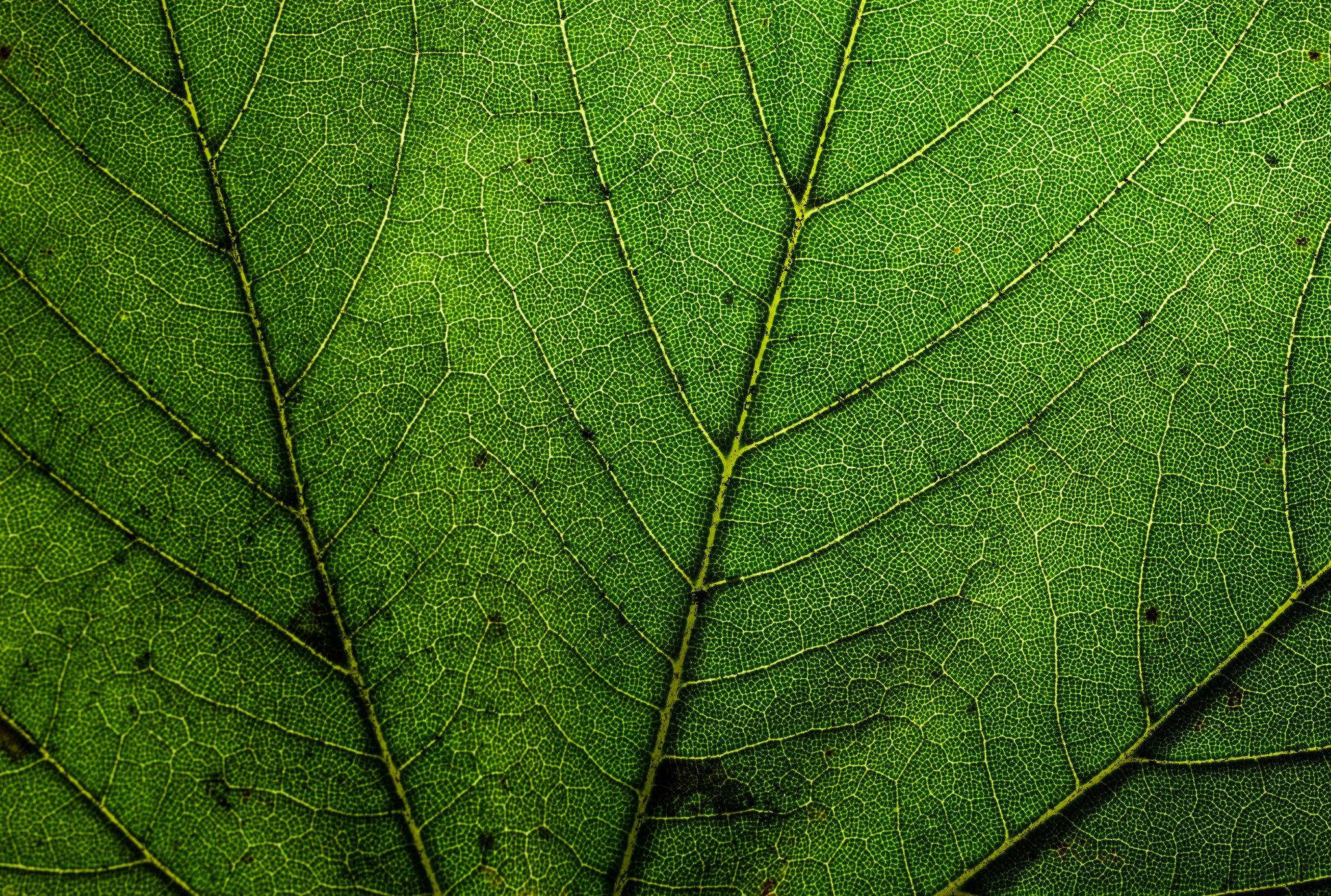 Green leaf dew nature walppaper branch tree macro ...