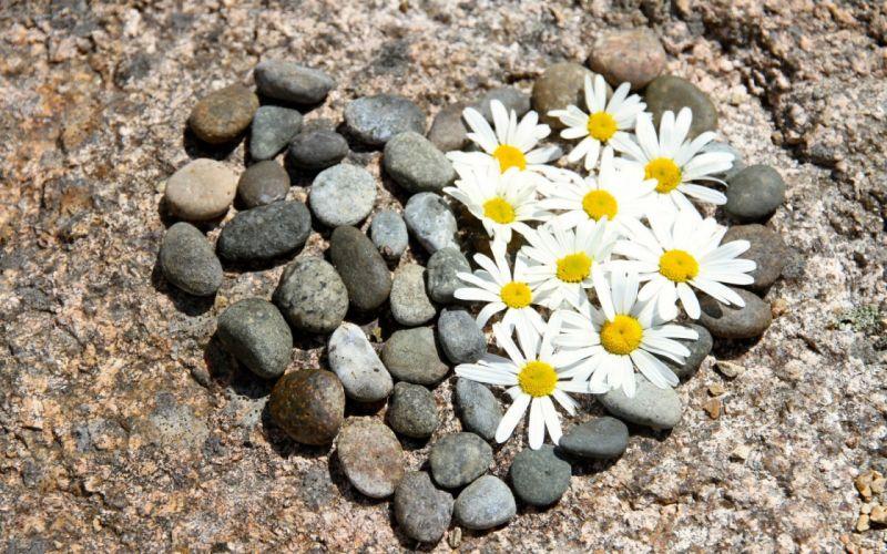 hearts love stones flowers wallpaper