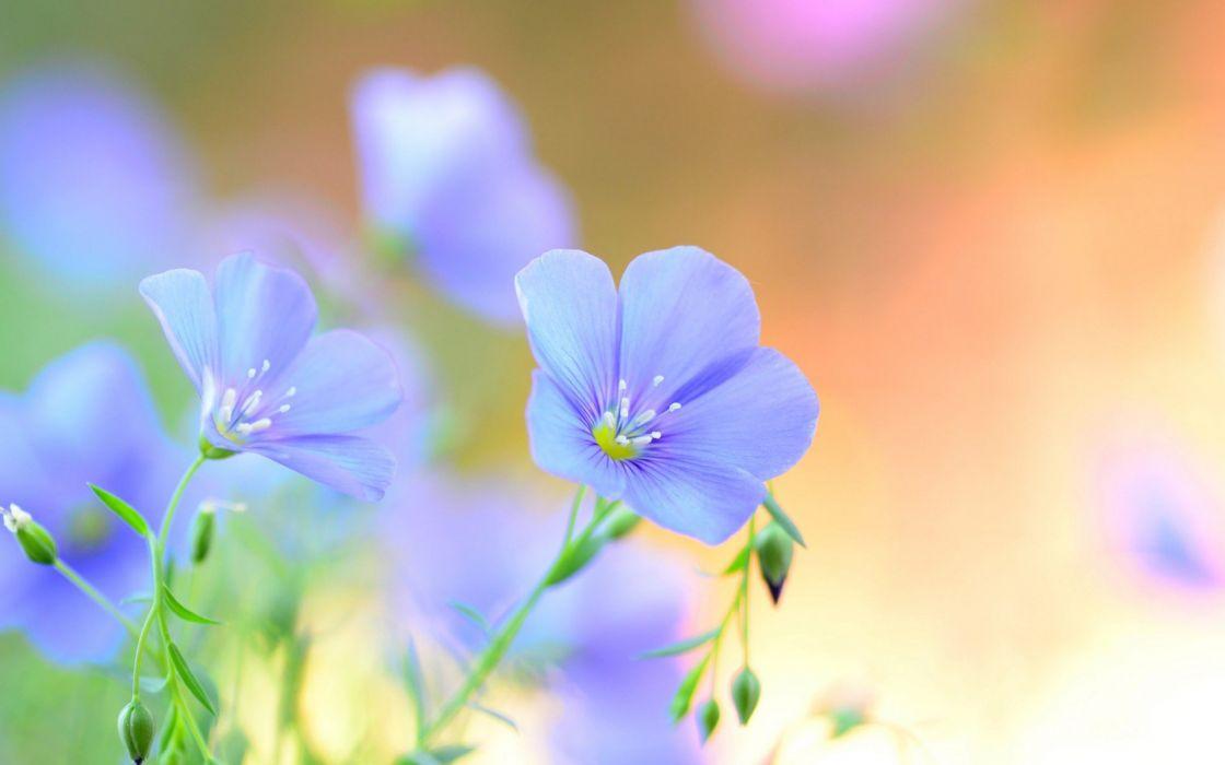 flowers blue nature green wallpaper
