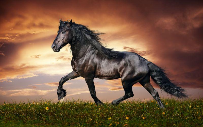 BLACK HORSE - beautiful-sunset wallpaper