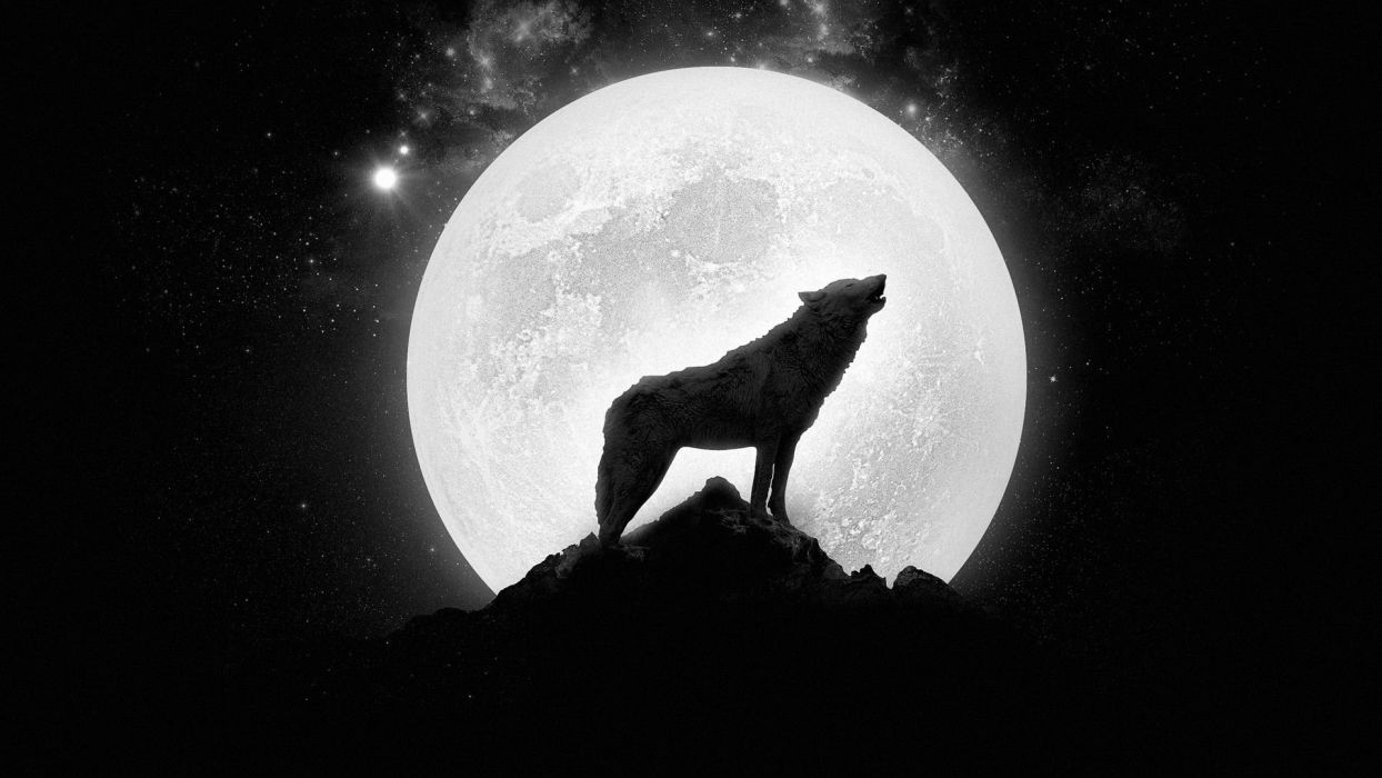 wolf howling - full moon wallpaper | 1920x1080 | 448699 | wallpaperup