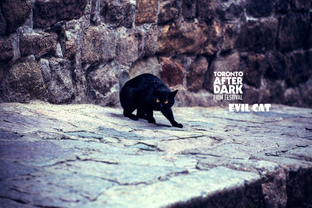 Evil Cat wallpaper