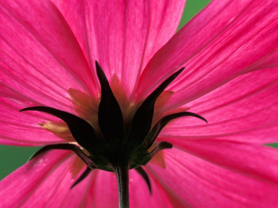 flowers nature plant beautiful green flower wallpaper